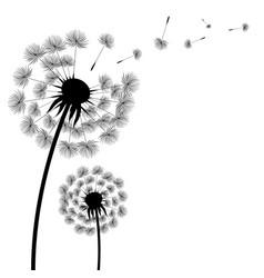 silhouette dandelion vector image
