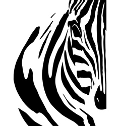Artistic closeup portrait of a zebra - emphasized vector
