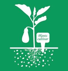 Eggplant cultivar green vector