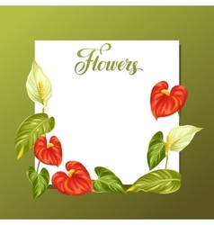 Decorative frame with flowers spathiphyllum and vector
