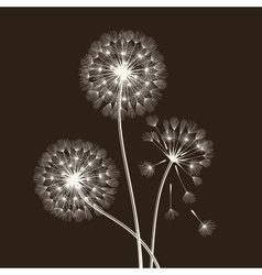 Blowball seeds vector image vector image