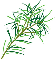 Tea tree vector