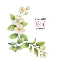 watercolor wreath of flowers and branches vector image