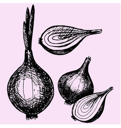 bulb onion with sprout vector image