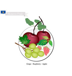 kosovo fruit delicious apple grapes and raspber vector image vector image
