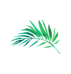 Green areca palm tree leaf hand drawn watercolor vector