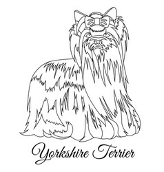 Yorkshire terrier dog outline vector