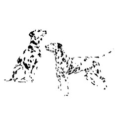 a collection of sketches breed dogs isolated hand vector image