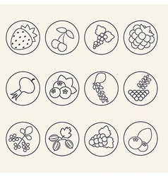 Set of berries icons vector image