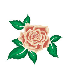 tea rose in leaves in cartoon style vector image vector image