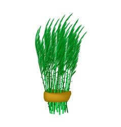 Fresh green acacia pennata bunch on white vector