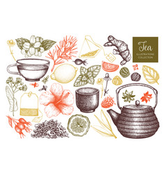 Tea sketch collection vector