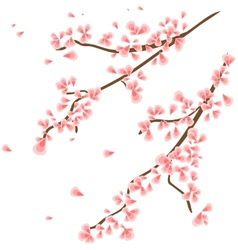 Branch with sakura flowers vector