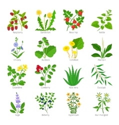 Aromatherapy medical herbs and flowers vector