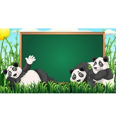 Board design with three pandas on grass vector