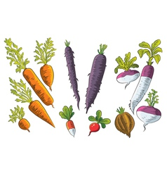 Tuber vegetables collection vector
