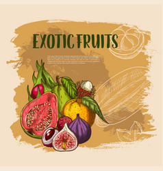 Exotic fresh tropical fruits poster vector