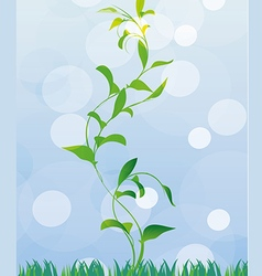 First spring sprout vector