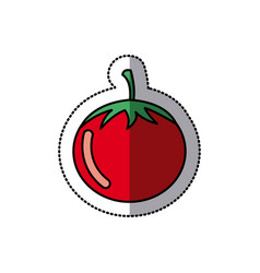 color vegetable tomato icon vector image vector image