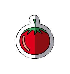 color vegetable tomato icon vector image