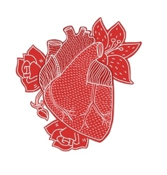 Human heart hand drawn isolated on a white vector