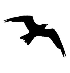 seagull flying silhouette isolated on white vector image