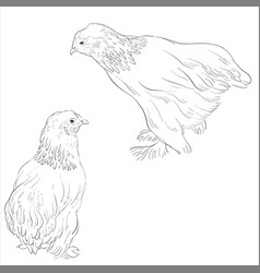 sketch of chickens vector image