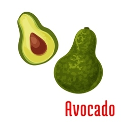 Avocado fruit color icon vector