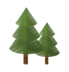 Colored canadian evergreen tree pine vector