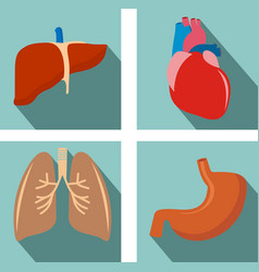 Set of organs - lungs liver heart stomach vector