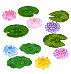 Natural set of stylized lotus flowers and leaves vector