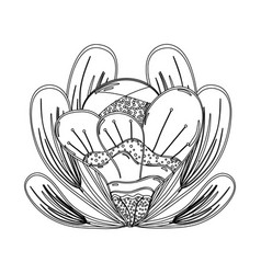 Contour beautiful petals flower herbal botany vector