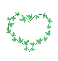 Green ivy leaves in a beautiful heart shape vector