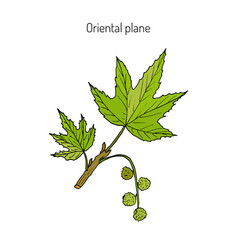 Occidental plane branch vector