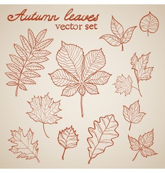 Autumn leaves colorful collection set vector