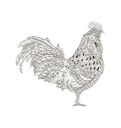 cock coloring book for adults vector image vector image