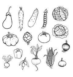 Hand drawn fresh organic vegetables set vector