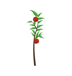 Tomatoes plant icon vector