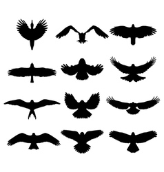 Birds in flight vector