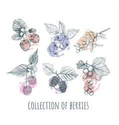 berries set collection of berries vector image