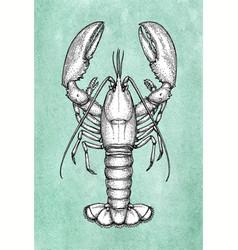 lobster ink sketch on old paper vector image