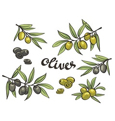 Set of green and black olives isolated objects vector