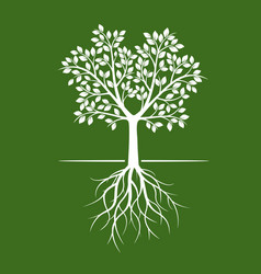 white trees with roots on green background vector image vector image