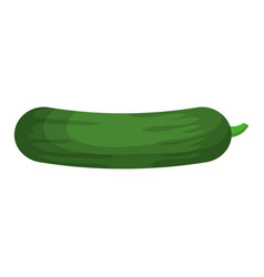 Cucumber fresh vegetable vector