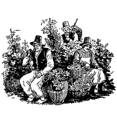 Vine pickers vector