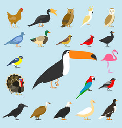 Big set of tropical domestic and other birds vector