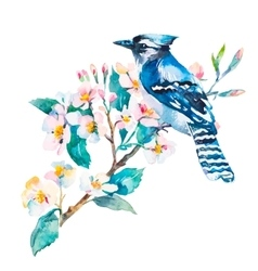 Blue jay isolated on a white background spring vector