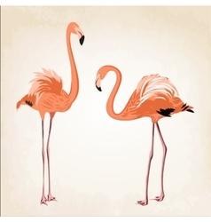 Beautiful pink flamingo birds vintage background vector