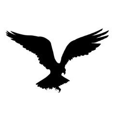 eagle flying silhouette isolated on white vector image vector image