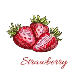 Strawberry isolated color sketch icon vector